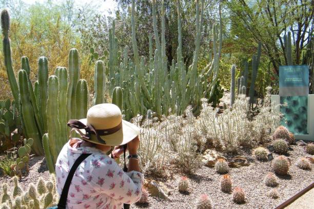 Melissa getting a good snapshot of some cacti.