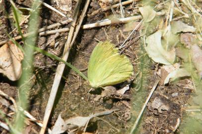 Many butterflies took advantage of the salts and other minerals present in the soil near the creek.