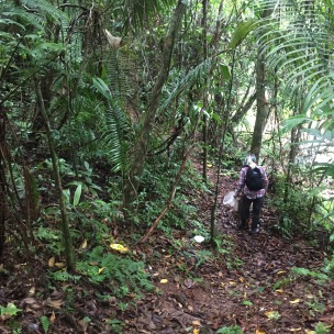 Majority of the jungle trails had clear paths like this but others were a little more trecherous.