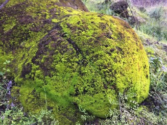 Moss formations were covering many rocks and boulders all along the trail, which is a great sign for spring time insects!
