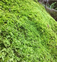 This boulder was completely covered in moss and the moss itself had an intersting texture.
