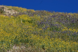 The purple/blue and yellow colors of these flowers contrasted each other very well and made for wonderful scenery.