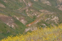 As I looked in the distance I could see more patches of color scattered across these hills.