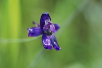 This Epilobium species was one that I had found much later in the season last year.