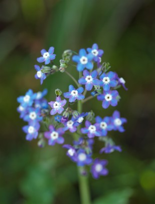 These flowers were often visited by native bees.