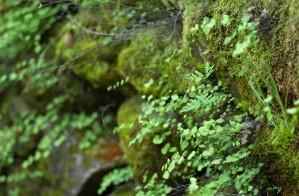 Ferns and moss were abundant on rocks near the creek.