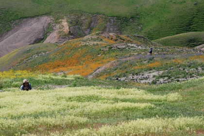 The gradient of colors along the hillside was spectacular.