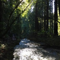 Redwood Creek was flowing very nicely and looked very clear.
