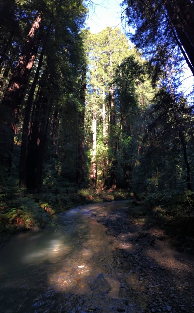 Another view over Redwood Creek and a good idea of how tall these trees really are.