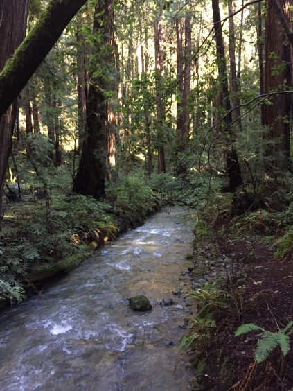 Redwood Creek was flowing very strongly, most likely because of the recent storms that brought a lot of rain to the area.