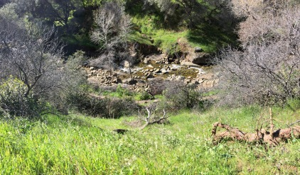 A few years ago, this spot of the creek was nothing more than a dry bed of rocks.