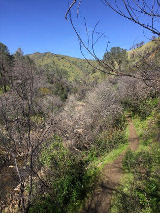 The canyon was lush with green grass along the main trail, only contrasted by the leafless trees that were already producing leaf buds.