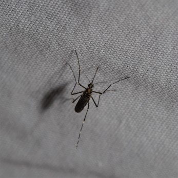 Because of the nearby creek these pesky mosquitoes were never far away from us.
