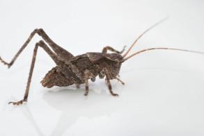 A katydid nypmh also made an appearance on the sheet.