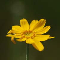 Close up of another aster species.