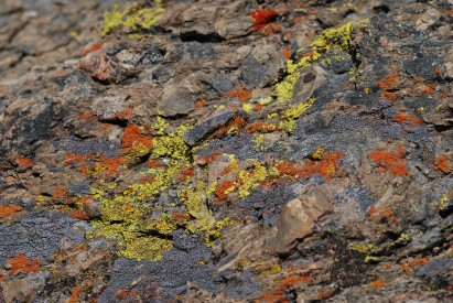 The lichen brought so much color to the canyon.
