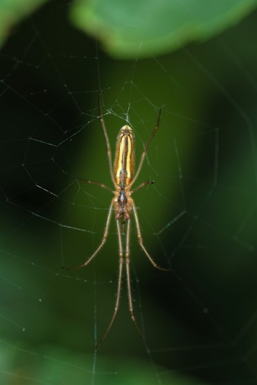 These spiders were quite common along the canyon trail.