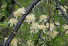 These flowers were also in great abundance along the trails.