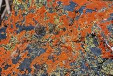 The lichens were astounding.