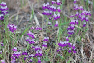 There was a part of the hillside that was covered with these wonderful flowers.