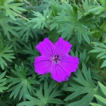 The vivd purple made this flower stand out among the others around it.
