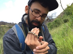 Thankfully the snake was cold and did not mind my warm hands.