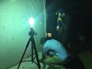 The mothman at work under the MV light.