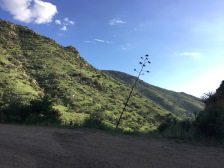 The hillsides were painted green with plants enjoying the recent monsoonal rains.
