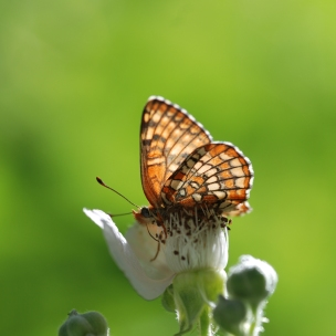 Natures stained glass windows can be seen through butterfly wings.