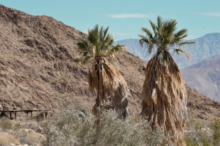 The typical campround scene at Anza-Borrego DSP.