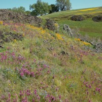 The lava rock underneath the wildflowers made their colors pop.