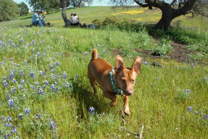 Happy skipping through the flowers.