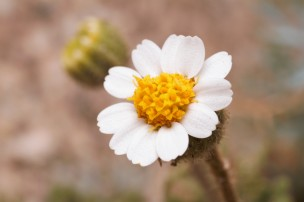 Another small wilflower I would encounter along the canyon trail.